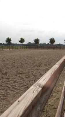 Ebbers Horses